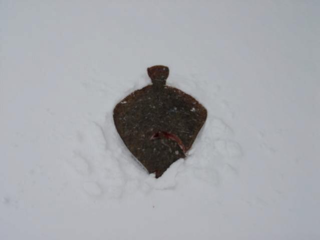 Helgoland im Schnee/Scholle auf Schnee