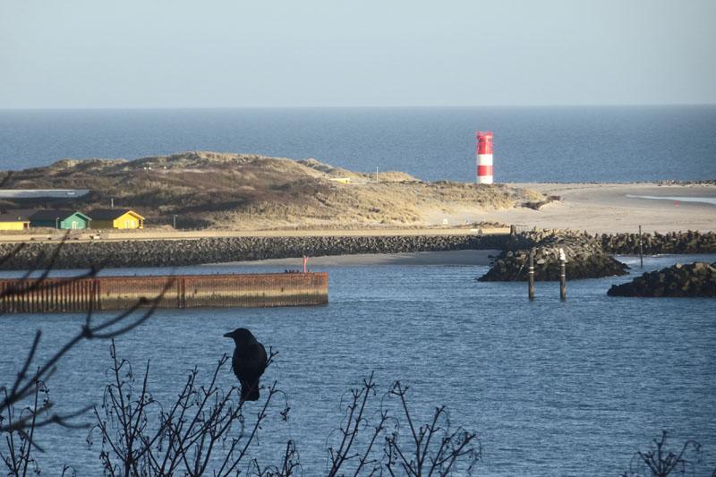 Blick von der Haupttreppe Helgolands über eine im Geäst sitzende Krähe hinüber zur Düne